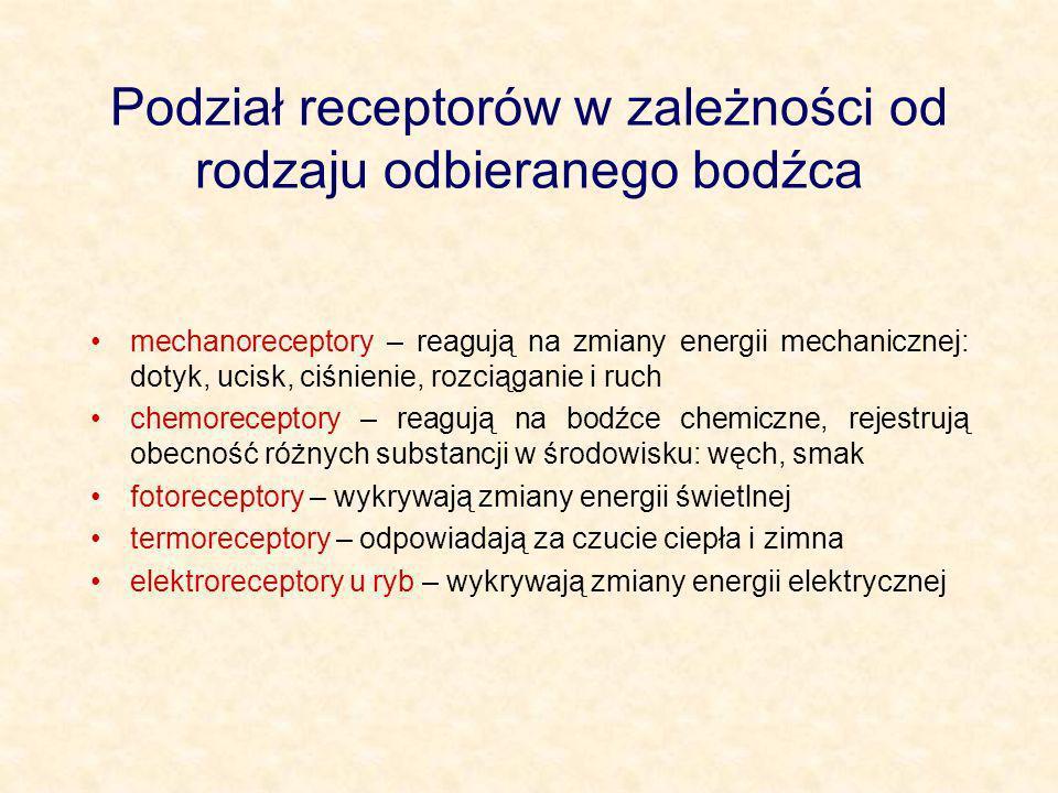 Podział receptorów w zależności od rodzaju odbieranego bodźca