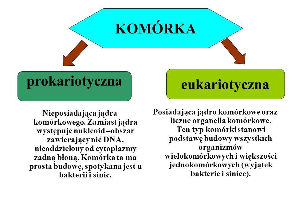 KOMÓRKA eukariotyczna
