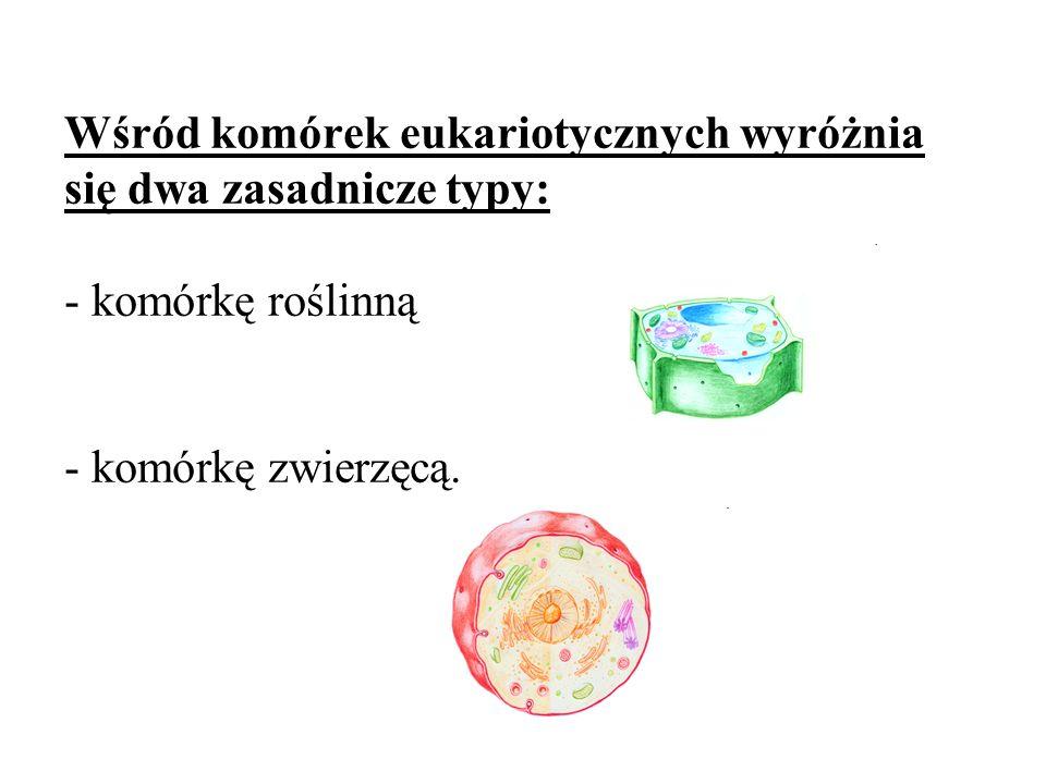 Wśród komórek eukariotycznych wyróżnia się dwa zasadnicze typy: - komórkę roślinną - komórkę zwierzęcą.