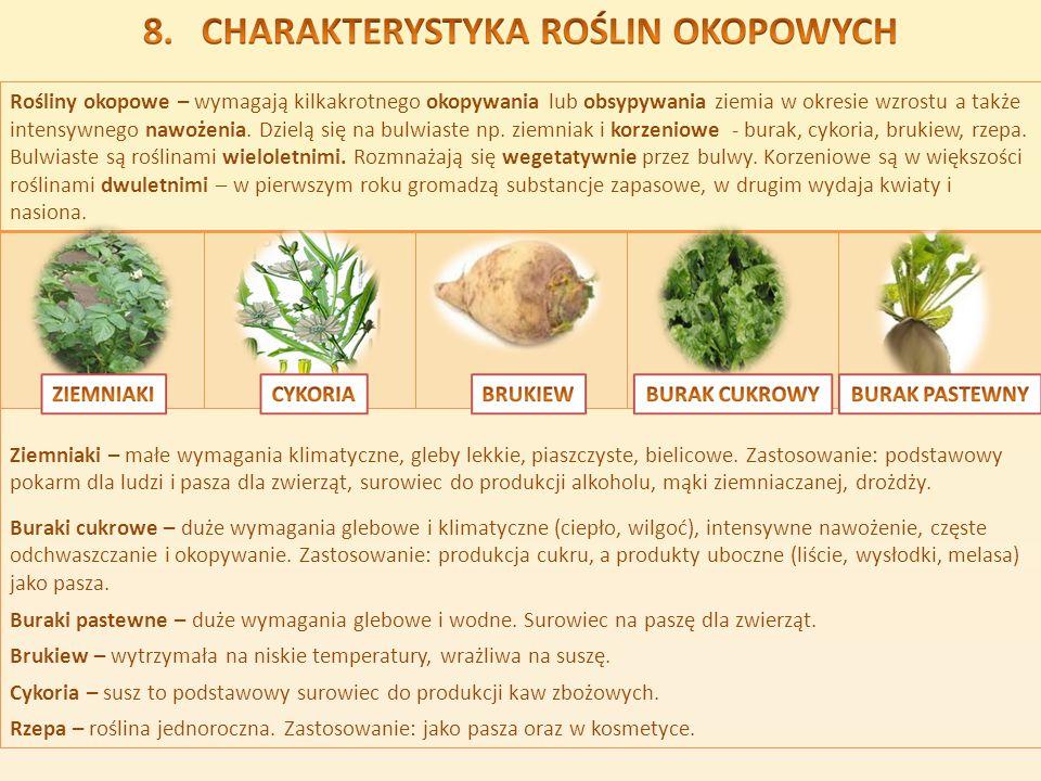 Rośliny okopowe – wymagają kilkakrotnego okopywania lub obsypywania ziemia w okresie wzrostu a także intensywnego nawożenia. Dzielą się na bulwiaste np. ziemniak i korzeniowe - burak, cykoria, brukiew, rzepa. Bulwiaste są roślinami wieloletnimi. Rozmnażają się wegetatywnie przez bulwy. Korzeniowe są w większości roślinami dwuletnimi – w pierwszym roku gromadzą substancje zapasowe, w drugim wydaja kwiaty i nasiona.