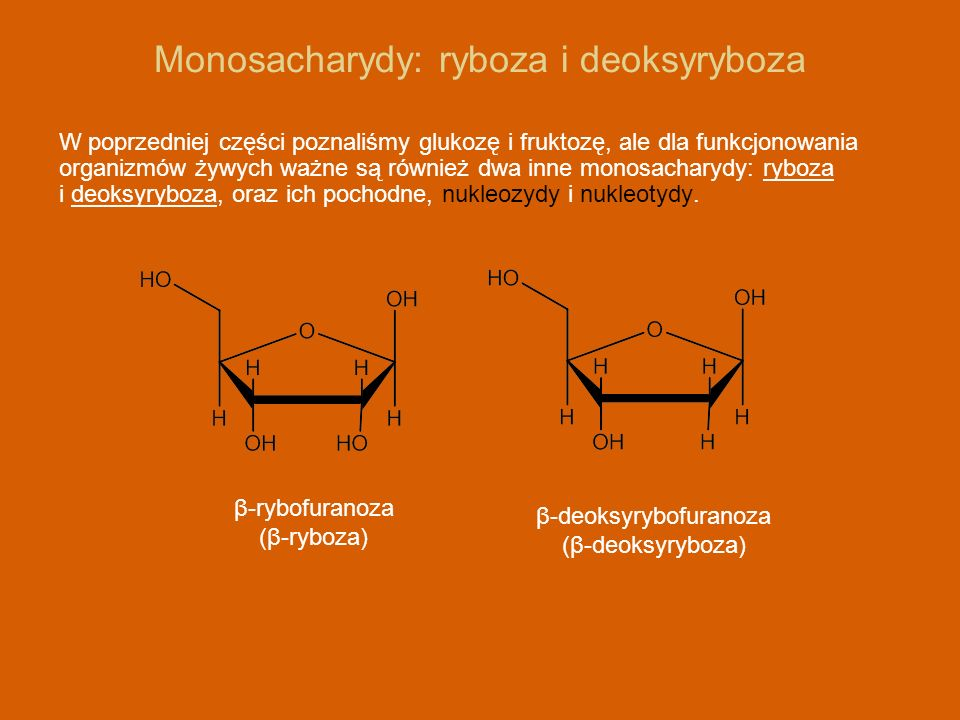 Monosacharydy: ryboza i deoksyryboza