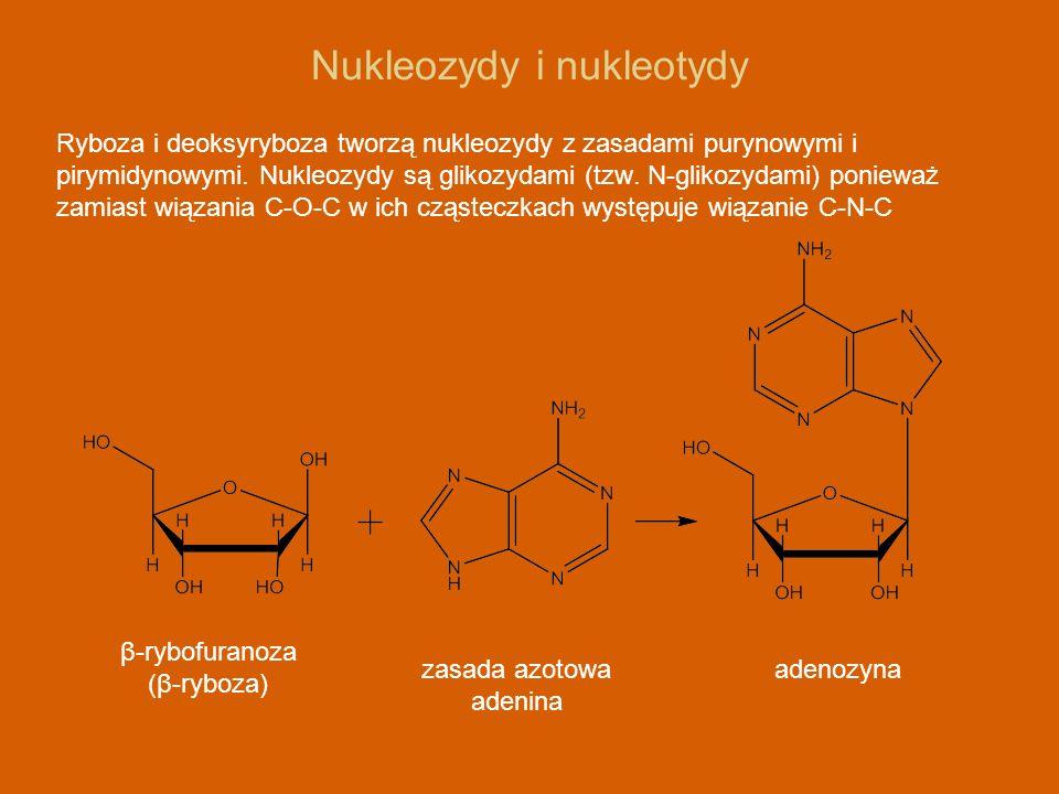 Nukleozydy i nukleotydy