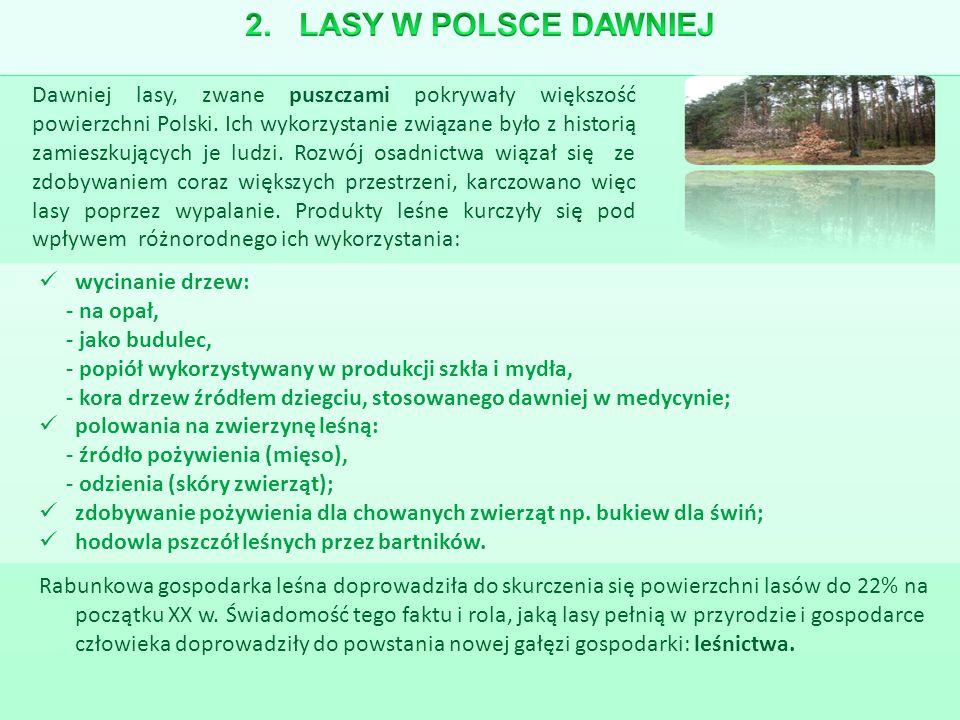 Dawniej lasy, zwane puszczami pokrywały większość powierzchni Polski