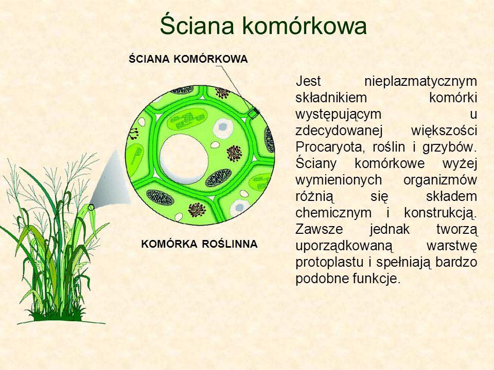 Ściana komórkowa ŚCIANA KOMÓRKOWA.