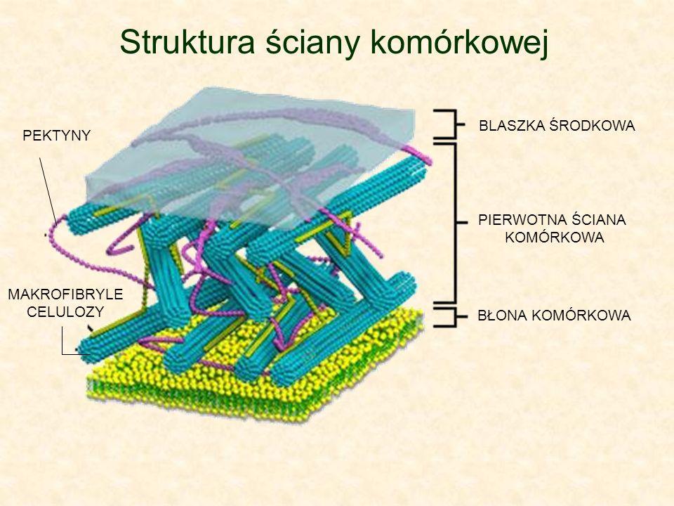 Struktura ściany komórkowej