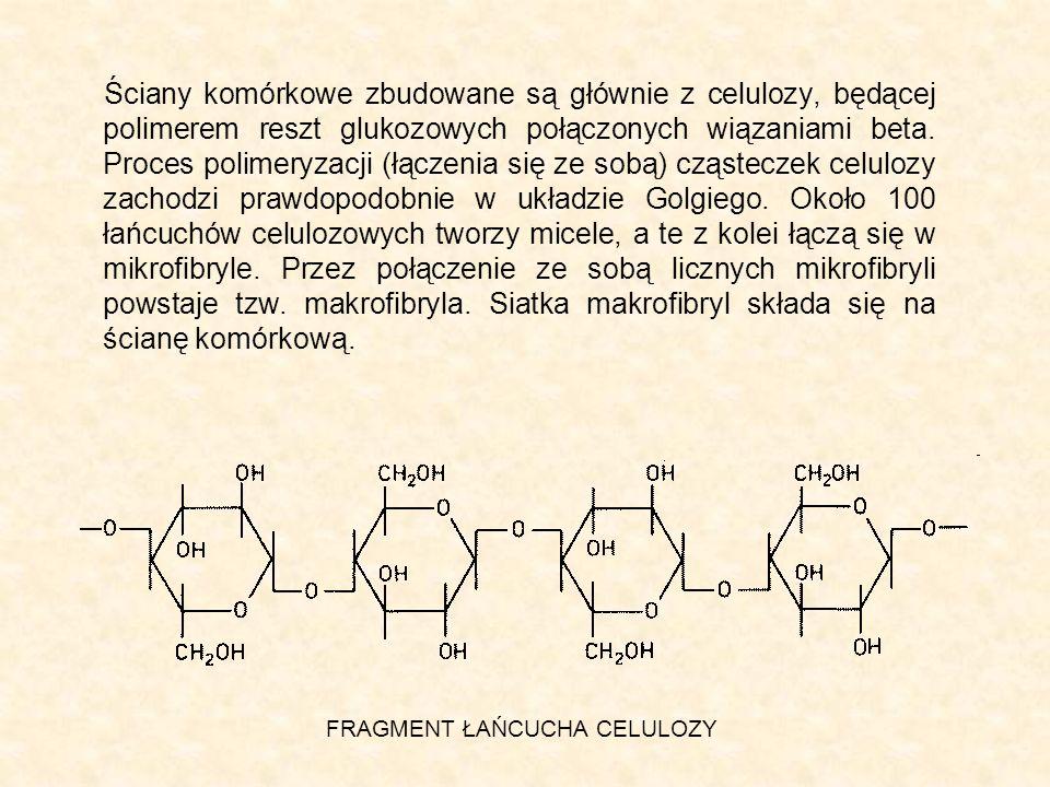 Ściany komórkowe zbudowane są głównie z celulozy, będącej polimerem reszt glukozowych połączonych wiązaniami beta. Proces polimeryzacji (łączenia się ze sobą) cząsteczek celulozy zachodzi prawdopodobnie w układzie Golgiego. Około 100 łańcuchów celulozowych tworzy micele, a te z kolei łączą się w mikrofibryle. Przez połączenie ze sobą licznych mikrofibryli powstaje tzw. makrofibryla. Siatka makrofibryl składa się na ścianę komórkową.