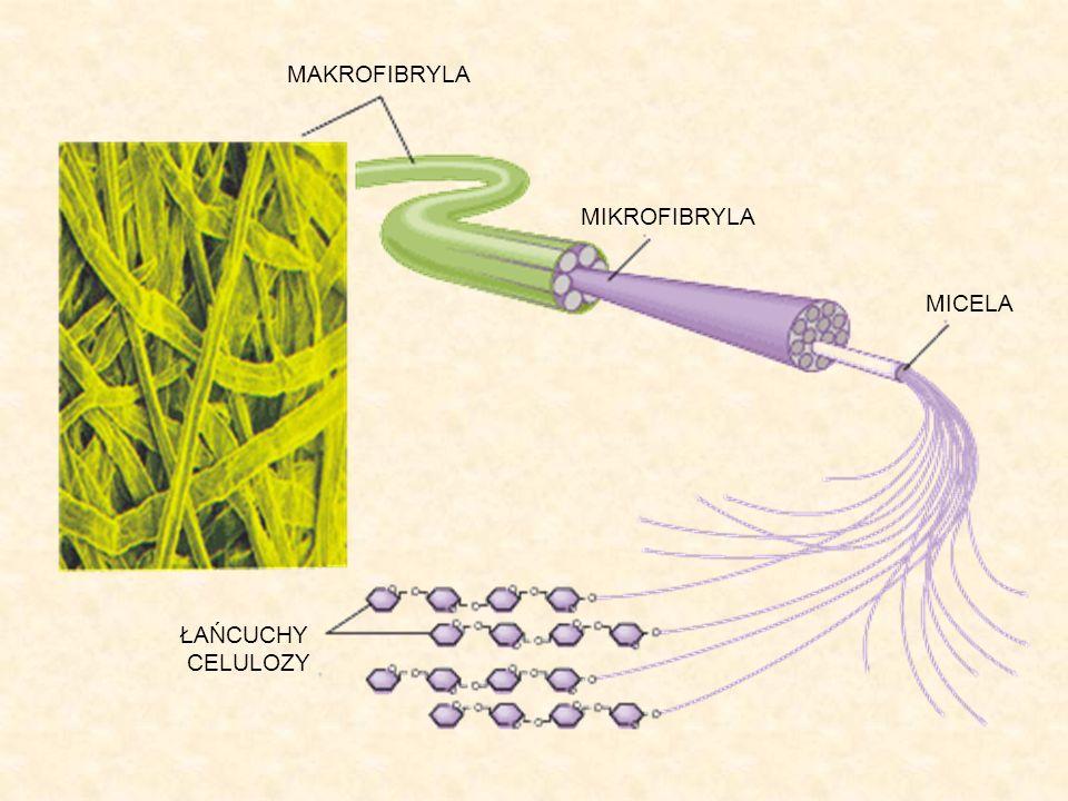 MAKROFIBRYLA MIKROFIBRYLA MICELA ŁAŃCUCHY CELULOZY