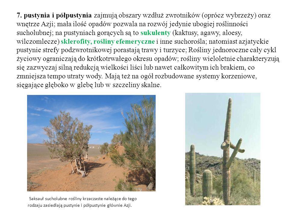 7. pustynia i półpustynia zajmują obszary wzdłuż zwrotników (oprócz wybrzeży) oraz wnętrze Azji; mała ilość opadów pozwala na rozwój jedynie ubogiej roślinności sucholubnej; na pustyniach gorących są to sukulenty (kaktusy, agawy, aloesy, wilczomlecze) sklerofity, rośliny efemeryczne i inne suchorośla; natomiast azjatyckie pustynie strefy podzwrotnikowej porastają trawy i turzyce; Rośliny jednoroczne cały cykl życiowy ograniczają do krótkotrwałego okresu opadów; rośliny wieloletnie charakteryzują się zazwyczaj silną redukcją wielkości liści lub nawet całkowitym ich brakiem, co zmniejsza tempo utraty wody. Mają też na ogół rozbudowane systemy korzeniowe, sięgające głęboko w glebę lub w szczeliny skalne.