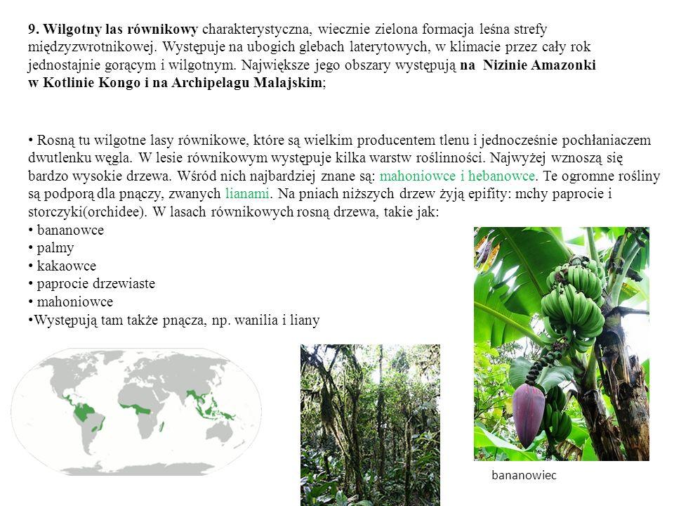 Występują tam także pnącza, np. wanilia i liany