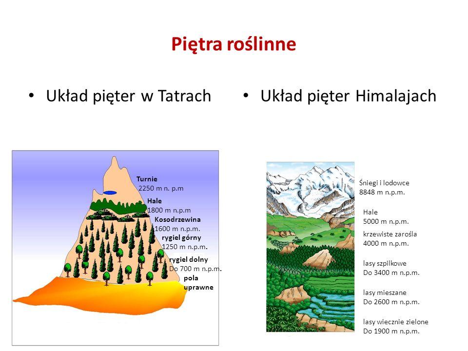Piętra roślinne Układ pięter w Tatrach Układ pięter Himalajach Turnie