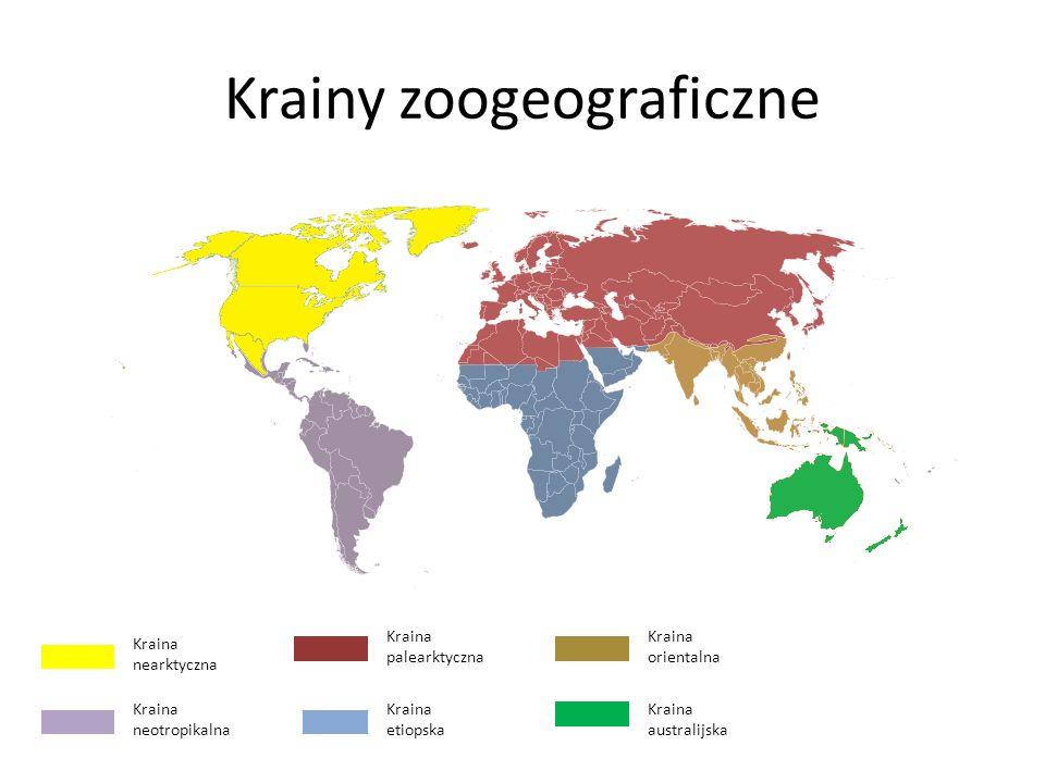 Krainy zoogeograficzne