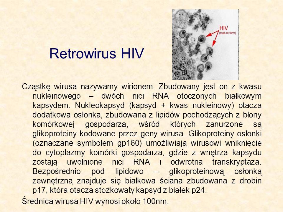 Retrowirus HIV