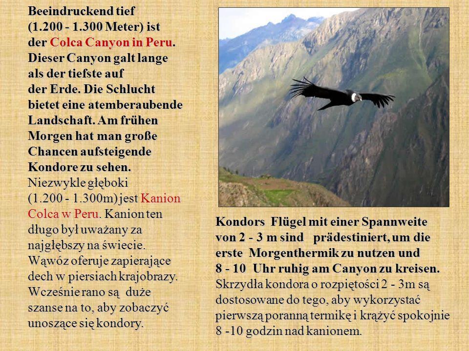 Beeindruckend tief (1.200 - 1.300 Meter) ist der Colca Canyon in Peru. Dieser Canyon galt lange als der tiefste auf der Erde. Die Schlucht bietet eine atemberaubende Landschaft. Am frühen Morgen hat man große Chancen aufsteigende Kondore zu sehen. Niezwykle głęboki (1.200 - 1.300m) jest Kanion Colca w Peru. Kanion ten długo był uważany za najgłębszy na świecie. Wąwóz oferuje zapierające dech w piersiach krajobrazy. Wcześnie rano są duże szanse na to, aby zobaczyć unoszące się kondory.