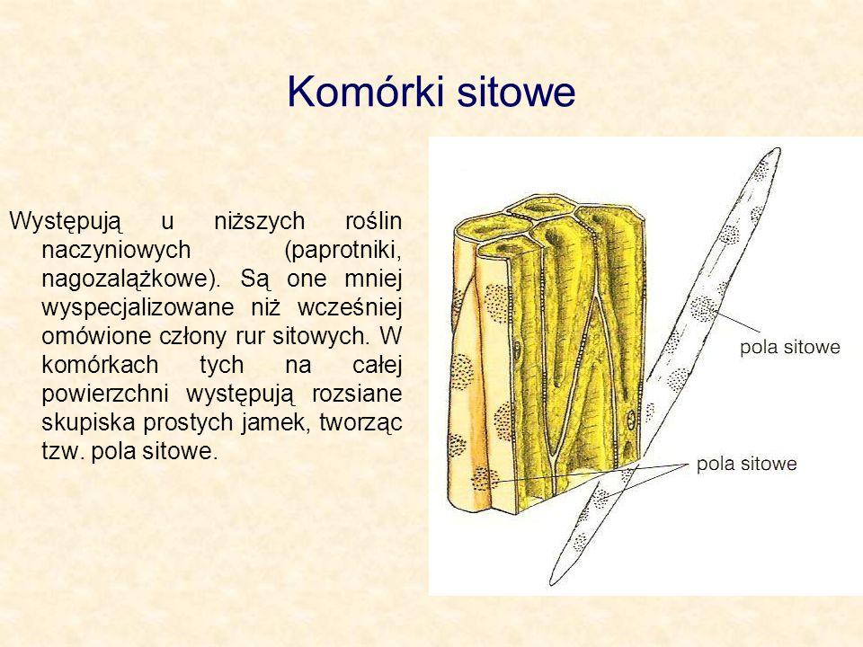 Komórki sitowe