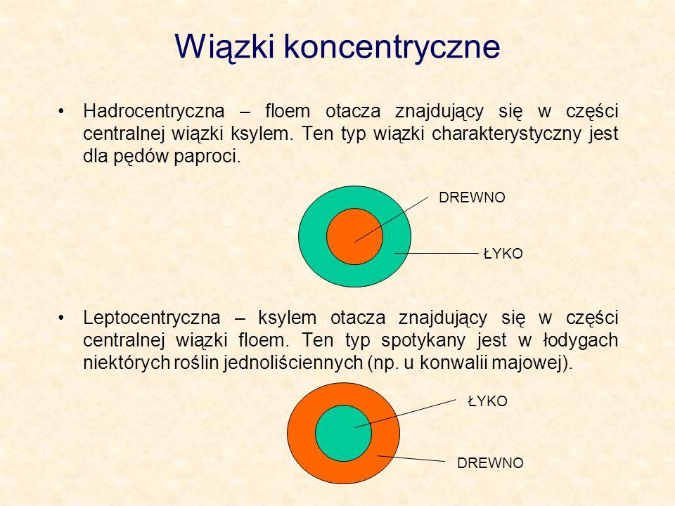 Wiązki koncentryczne