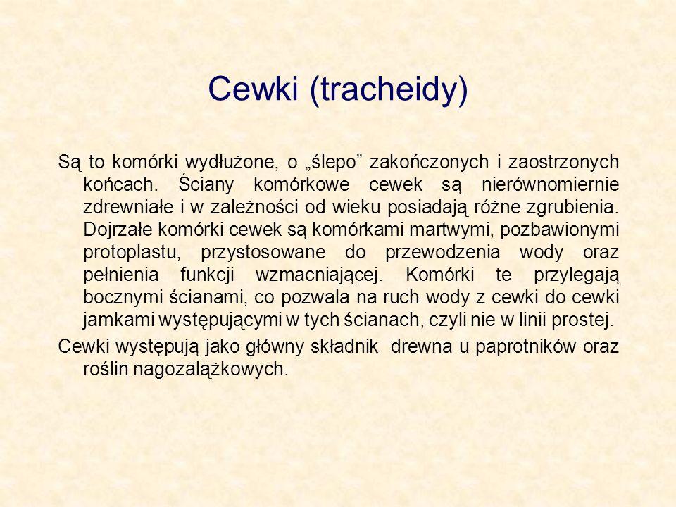 Cewki (tracheidy)