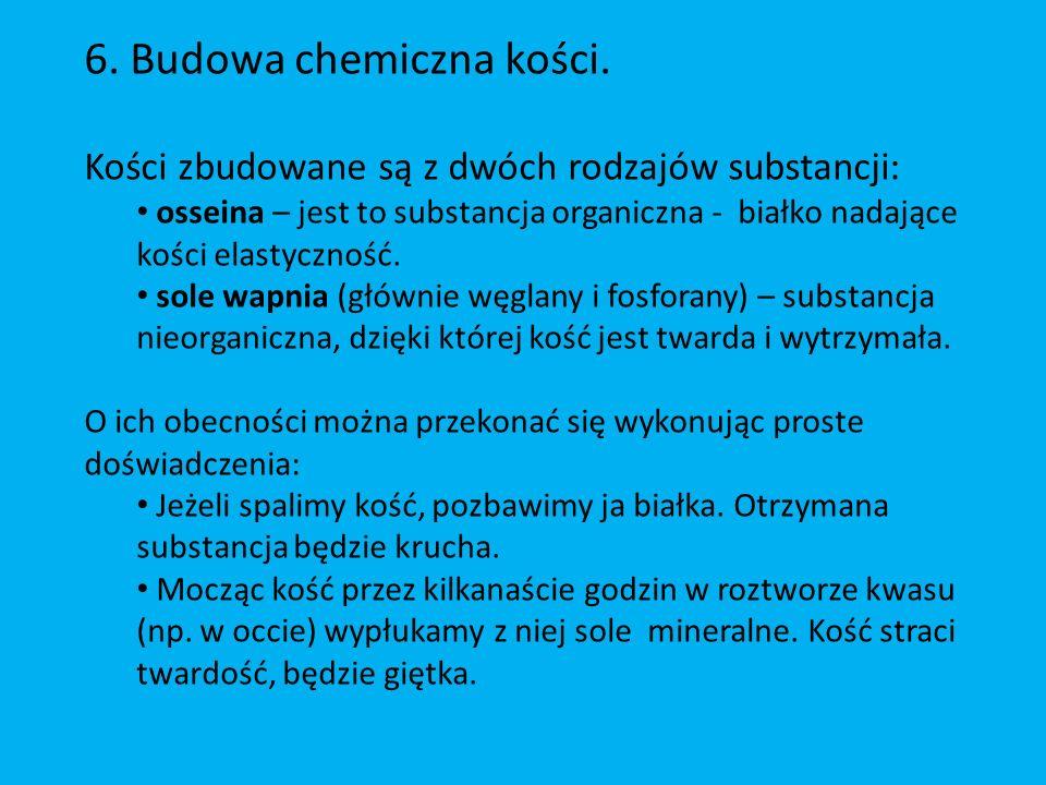 6. Budowa chemiczna kości.
