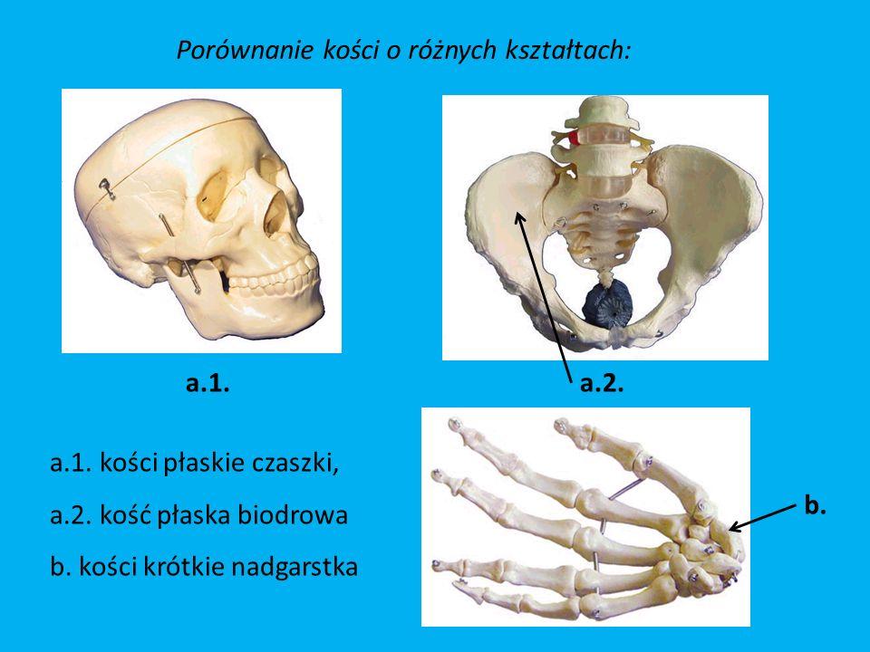 Porównanie kości o różnych kształtach: