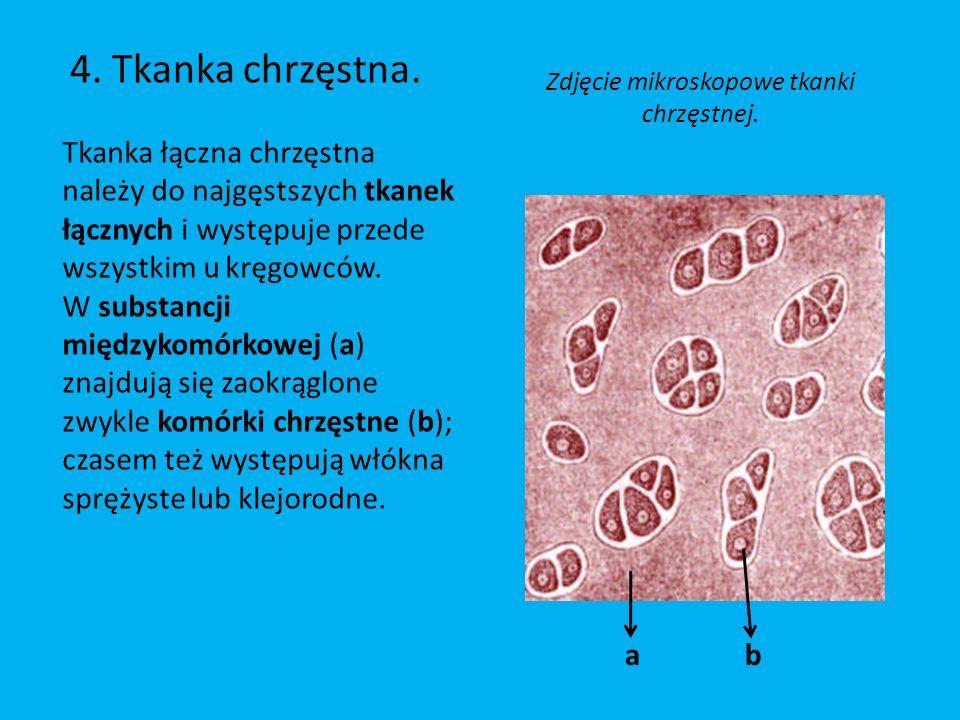 Zdjęcie mikroskopowe tkanki chrzęstnej.