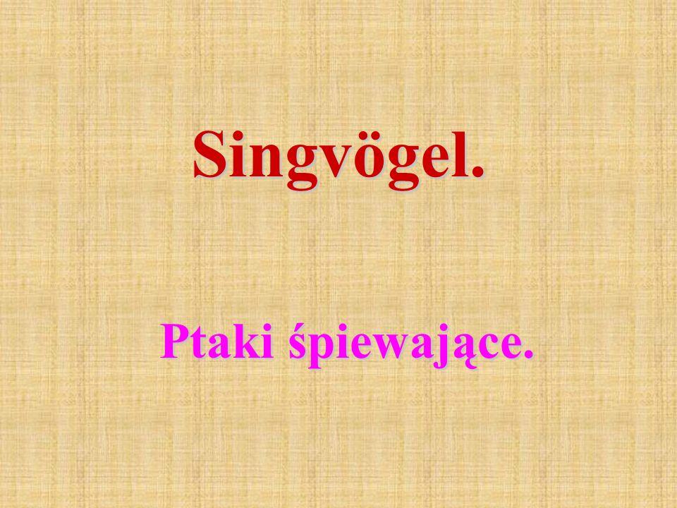 Singvögel. Ptaki śpiewające.