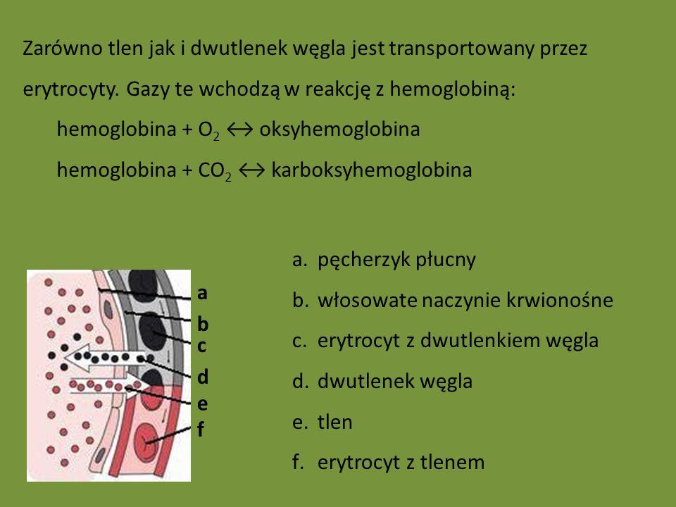Zarówno tlen jak i dwutlenek węgla jest transportowany przez erytrocyty. Gazy te wchodzą w reakcję z hemoglobiną: