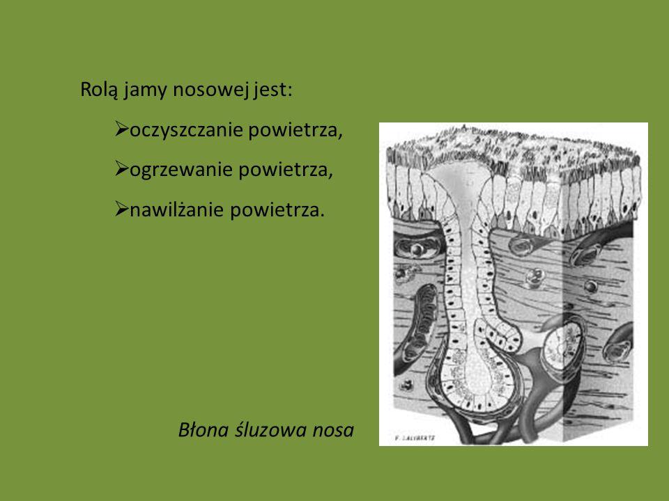 Rolą jamy nosowej jest: