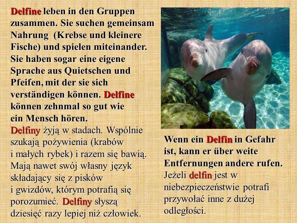 Delfine leben in den Gruppen zusammen