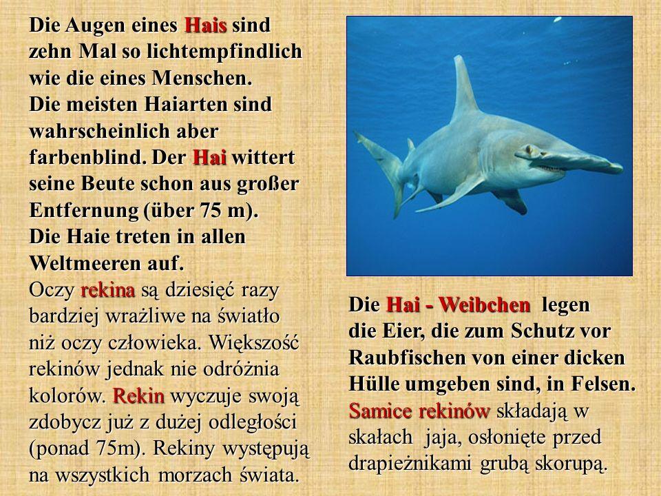 Die Augen eines Hais sind zehn Mal so lichtempfindlich wie die eines Menschen. Die meisten Haiarten sind wahrscheinlich aber farbenblind. Der Hai wittert seine Beute schon aus großer Entfernung (über 75 m). Die Haie treten in allen Weltmeeren auf. Oczy rekina są dziesięć razy bardziej wrażliwe na światło niż oczy człowieka. Większość rekinów jednak nie odróżnia kolorów. Rekin wyczuje swoją zdobycz już z dużej odległości (ponad 75m). Rekiny występują na wszystkich morzach świata.