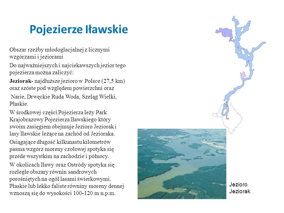 Pojezierze Iławskie Obszar rzeźby młodoglacjalnej z licznymi wzgórzami i jeziorami.