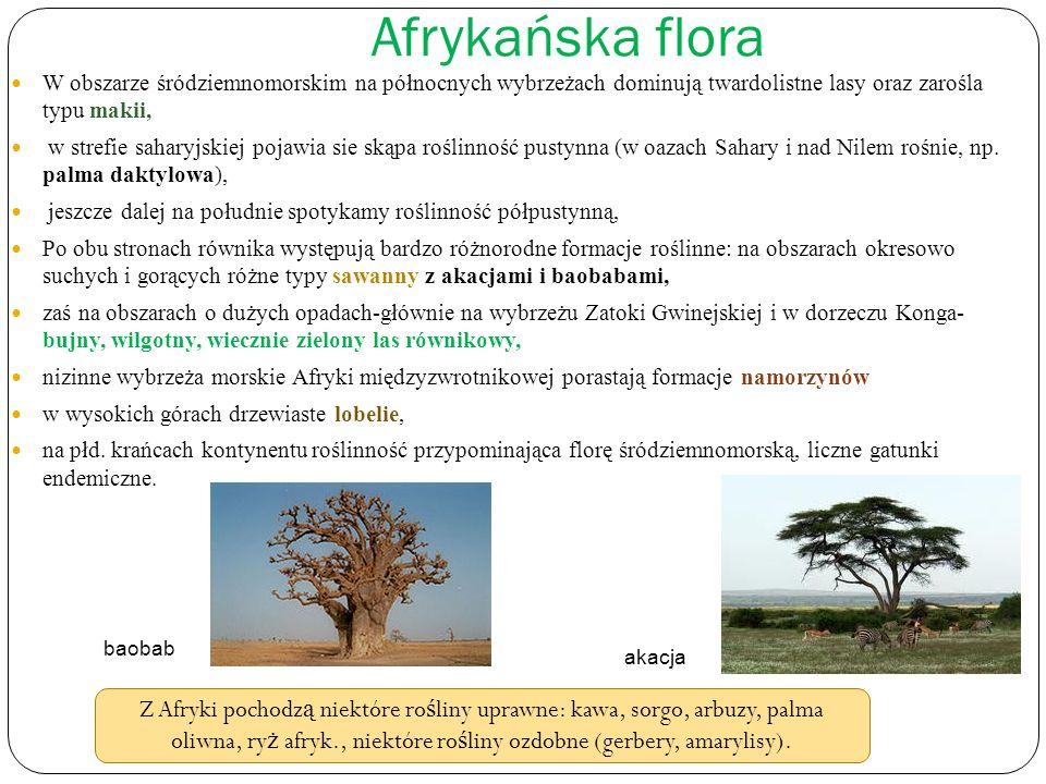 Afrykańska flora W obszarze śródziemnomorskim na północnych wybrzeżach dominują twardolistne lasy oraz zarośla typu makii,