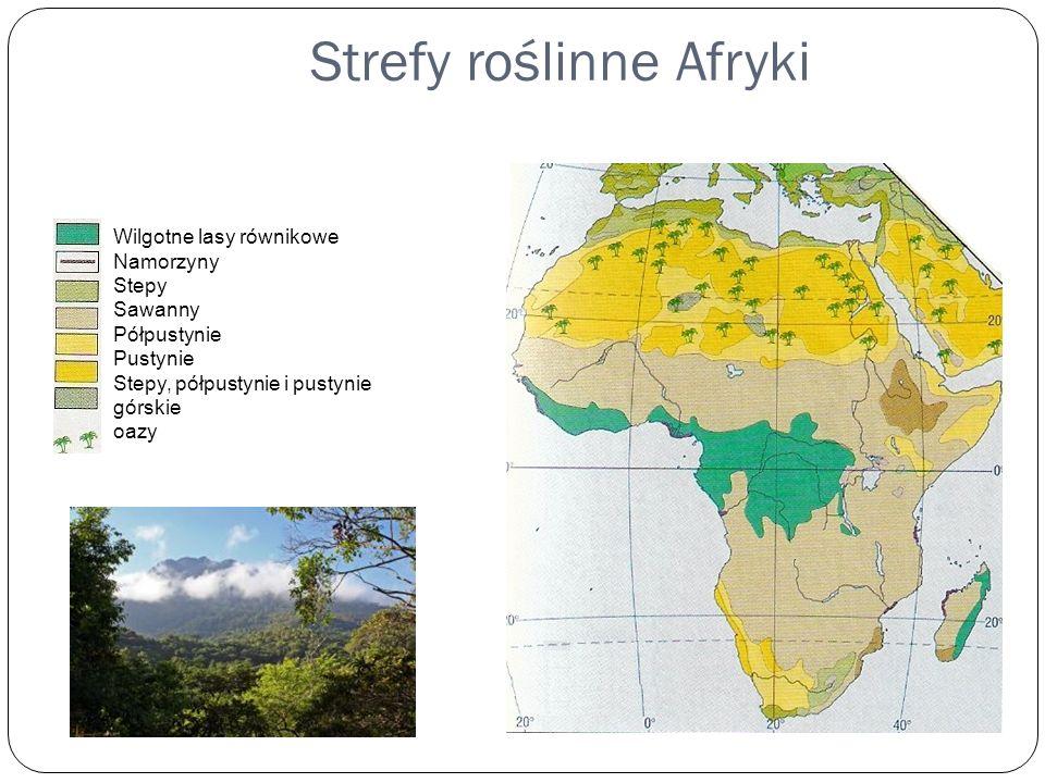 Strefy roślinne Afryki