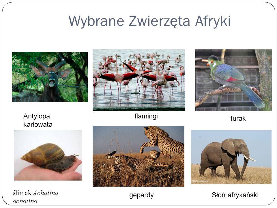 Wybrane Zwierzęta Afryki