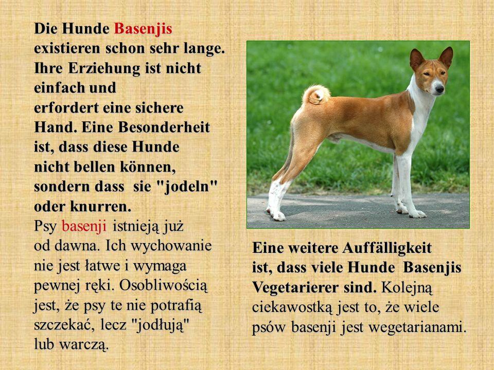 Die Hunde Basenjis existieren schon sehr lange