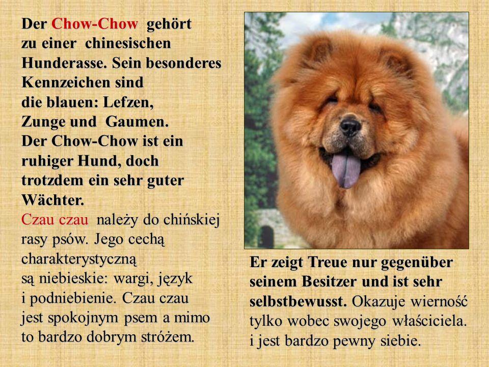 Der Chow-Chow gehört zu einer chinesischen Hunderasse