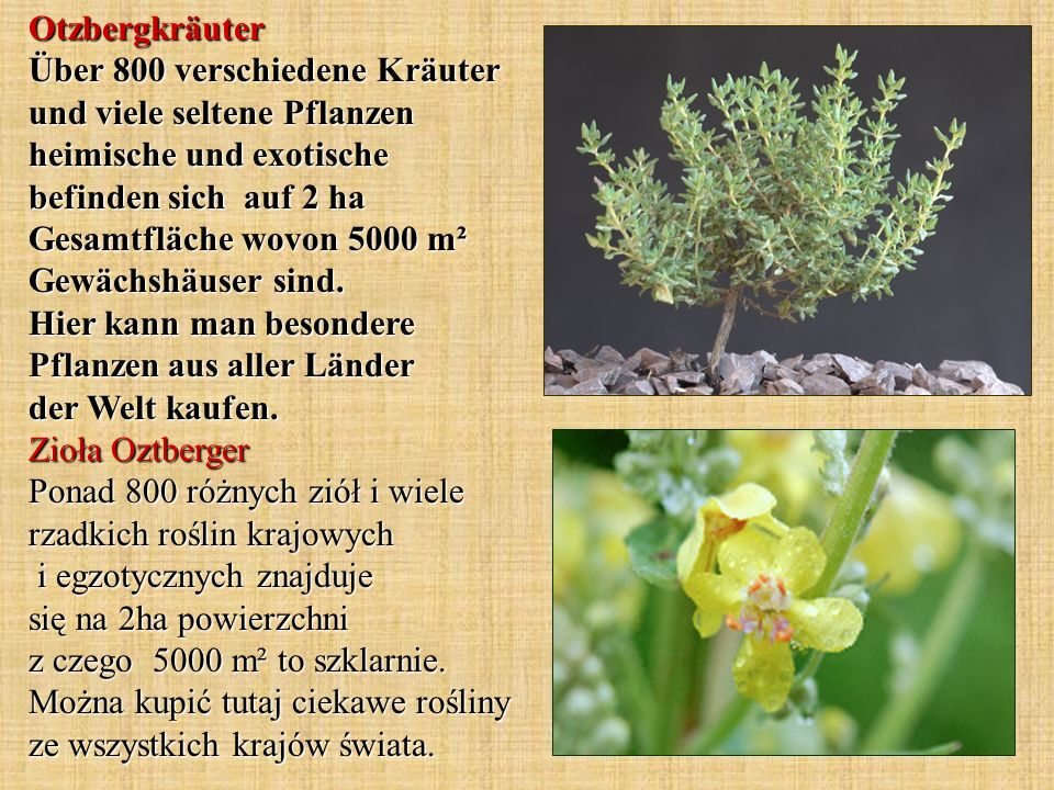 Otzbergkräuter Über 800 verschiedene Kräuter und viele seltene Pflanzen heimische und exotische befinden sich auf 2 ha Gesamtfläche wovon 5000 m² Gewächshäuser sind.