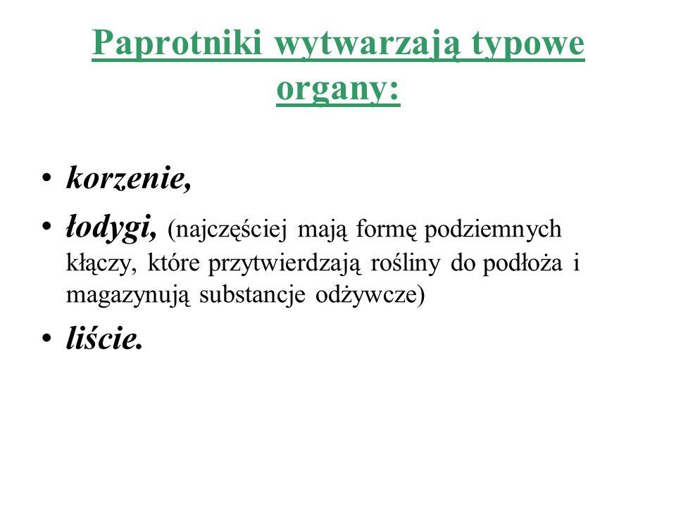 Paprotniki wytwarzają typowe organy:
