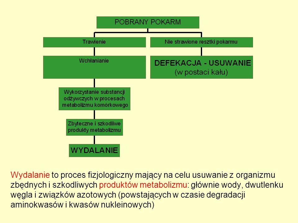 Wydalanie to proces fizjologiczny mający na celu usuwanie z organizmu zbędnych i szkodliwych produktów metabolizmu: głównie wody, dwutlenku węgla i związków azotowych (powstających w czasie degradacji aminokwasów i kwasów nukleinowych)