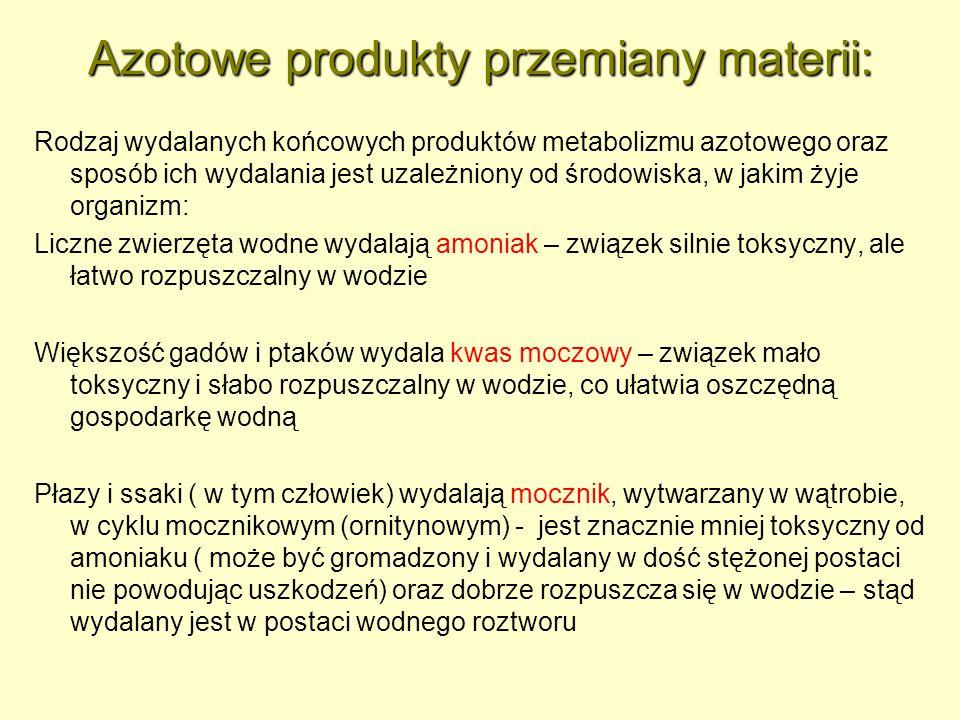 Azotowe produkty przemiany materii: