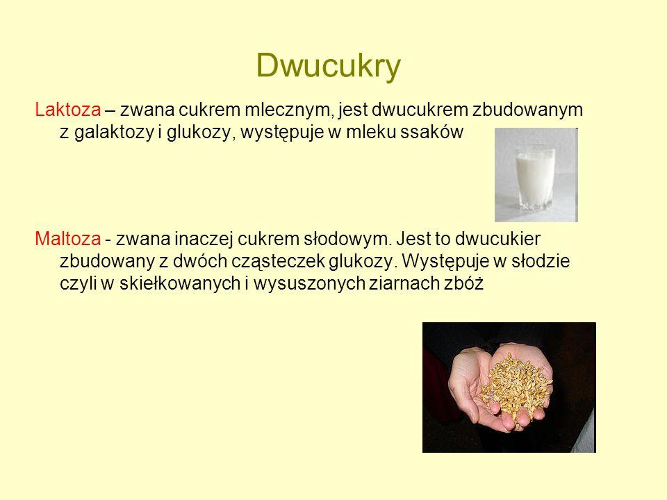 Dwucukry Laktoza – zwana cukrem mlecznym, jest dwucukrem zbudowanym z galaktozy i glukozy, występuje w mleku ssaków.