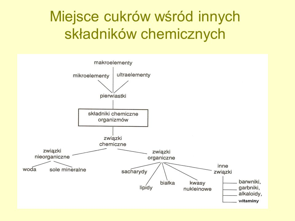 Miejsce cukrów wśród innych składników chemicznych