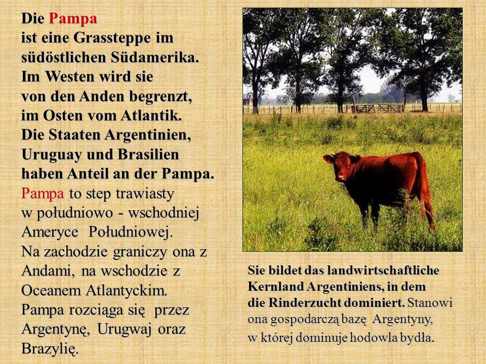 Die Pampa ist eine Grassteppe im südöstlichen Südamerika