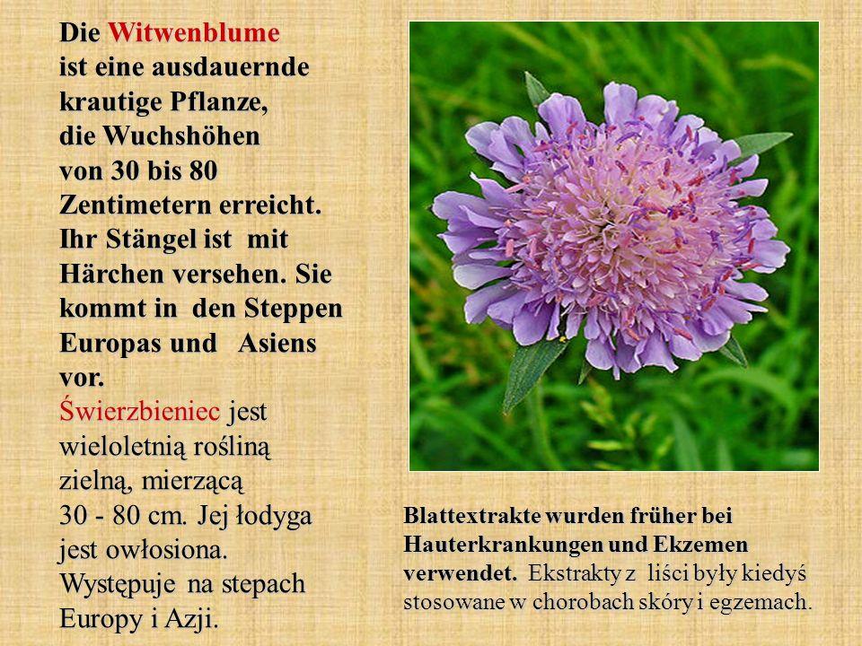 Die Witwenblume ist eine ausdauernde krautige Pflanze, die Wuchshöhen von 30 bis 80 Zentimetern erreicht. Ihr Stängel ist mit Härchen versehen. Sie kommt in den Steppen Europas und Asiens vor. Świerzbieniec jest wieloletnią rośliną zielną, mierzącą 30 - 80 cm. Jej łodyga jest owłosiona. Występuje na stepach Europy i Azji.