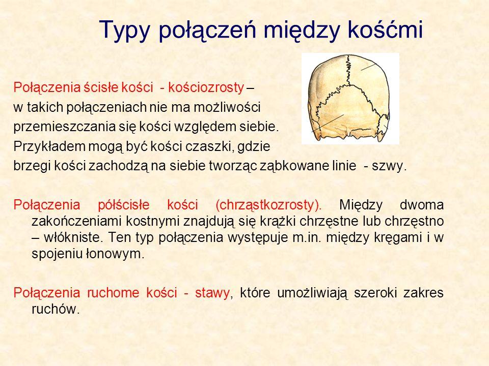 Typy połączeń między kośćmi