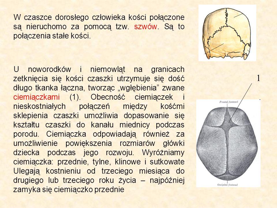 W czaszce dorosłego człowieka kości połączone są nieruchomo za pomocą tzw. szwów. Są to połączenia stałe kości.