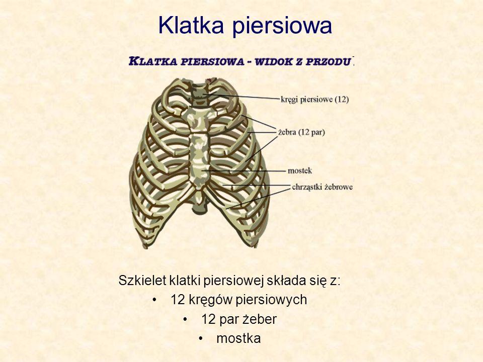 Szkielet klatki piersiowej składa się z: