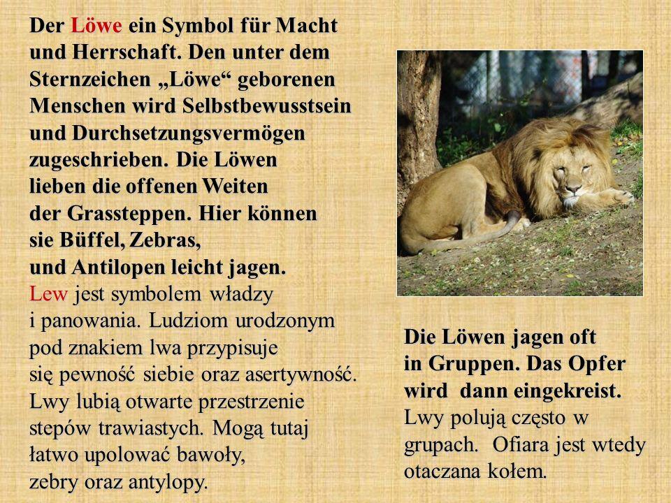 Der Löwe ein Symbol für Macht und Herrschaft