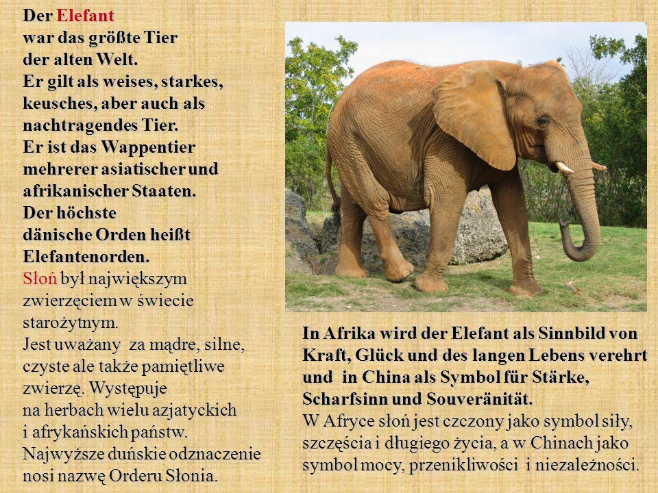 Der Elefant war das größte Tier der alten Welt