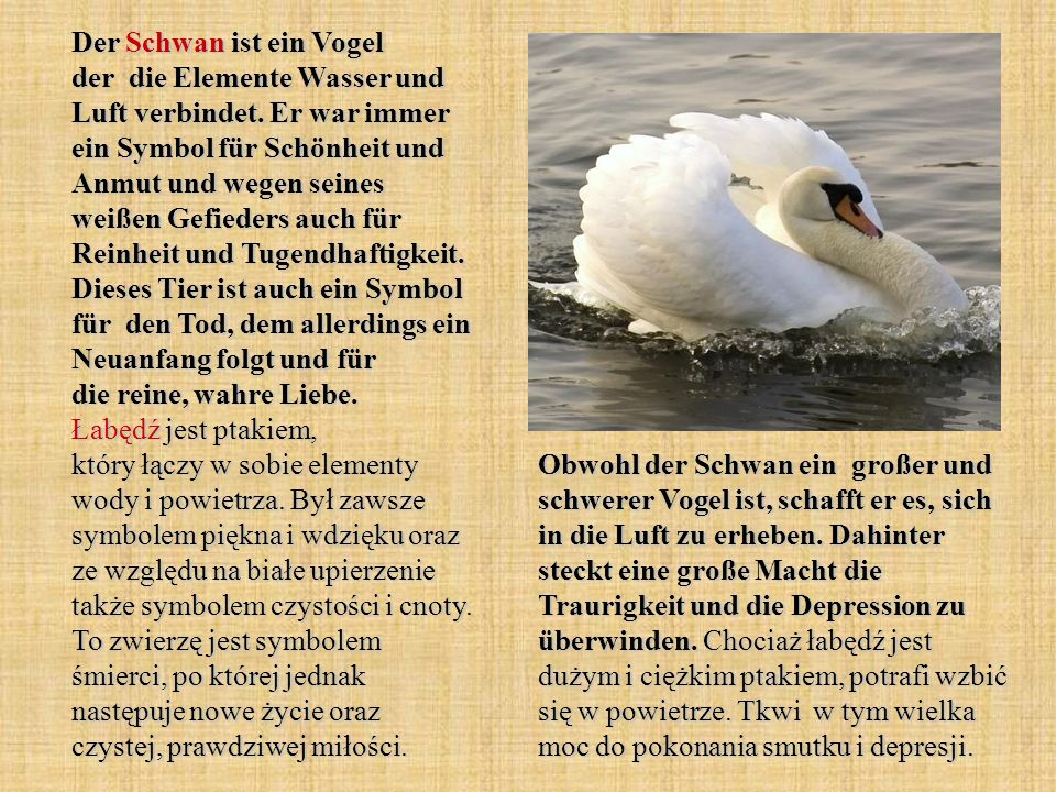 Der Schwan ist ein Vogel der die Elemente Wasser und Luft verbindet