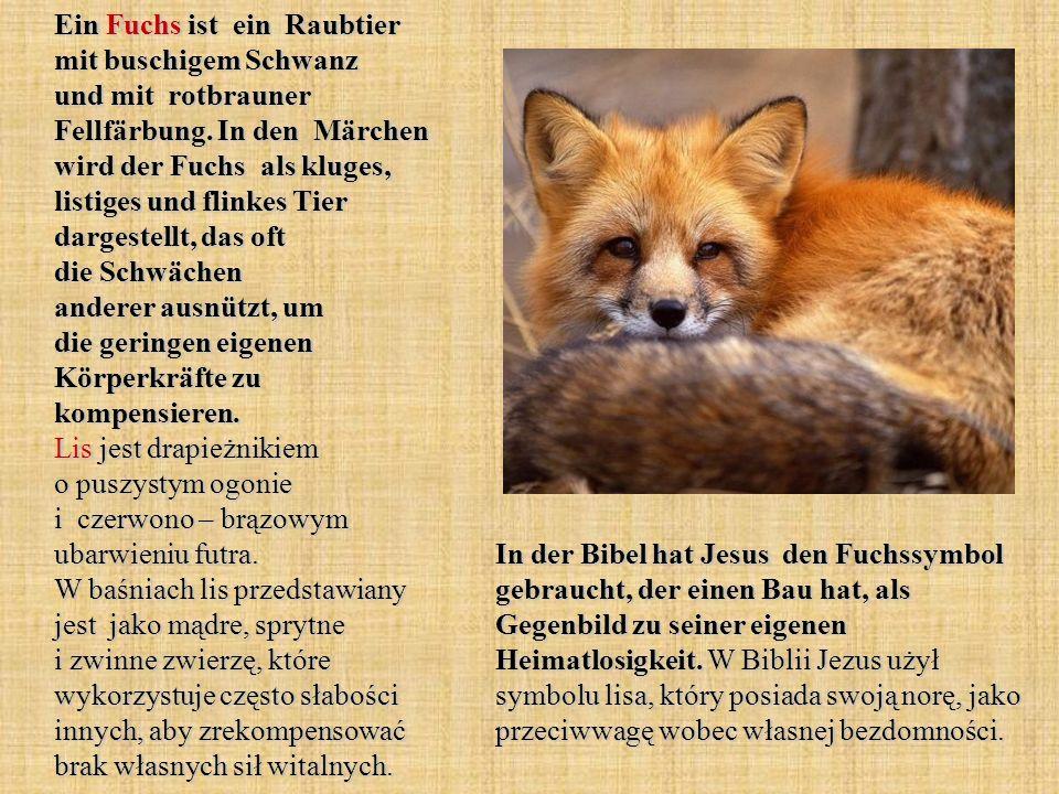 Ein Fuchs ist ein Raubtier mit buschigem Schwanz und mit rotbrauner Fellfärbung. In den Märchen wird der Fuchs als kluges, listiges und flinkes Tier dargestellt, das oft die Schwächen anderer ausnützt, um die geringen eigenen Körperkräfte zu kompensieren. Lis jest drapieżnikiem o puszystym ogonie i czerwono – brązowym ubarwieniu futra. W baśniach lis przedstawiany jest jako mądre, sprytne i zwinne zwierzę, które wykorzystuje często słabości innych, aby zrekompensować brak własnych sił witalnych.