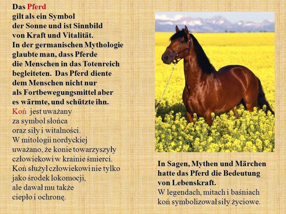 Das Pferd gilt als ein Symbol der Sonne und ist Sinnbild von Kraft und Vitalität. In der germanischen Mythologie glaubte man, dass Pferde die Menschen in das Totenreich begleiteten. Das Pferd diente dem Menschen nicht nur als Fortbewegungsmittel aber es wärmte, und schützte ihn. Koń jest uważany za symbol słońca oraz siły i witalności. W mitologii nordyckiej uważano, że konie towarzyszyły człowiekowi w krainie śmierci. Koń służył człowiekowi nie tylko jako środek lokomocji, ale dawał mu także ciepło i ochronę.